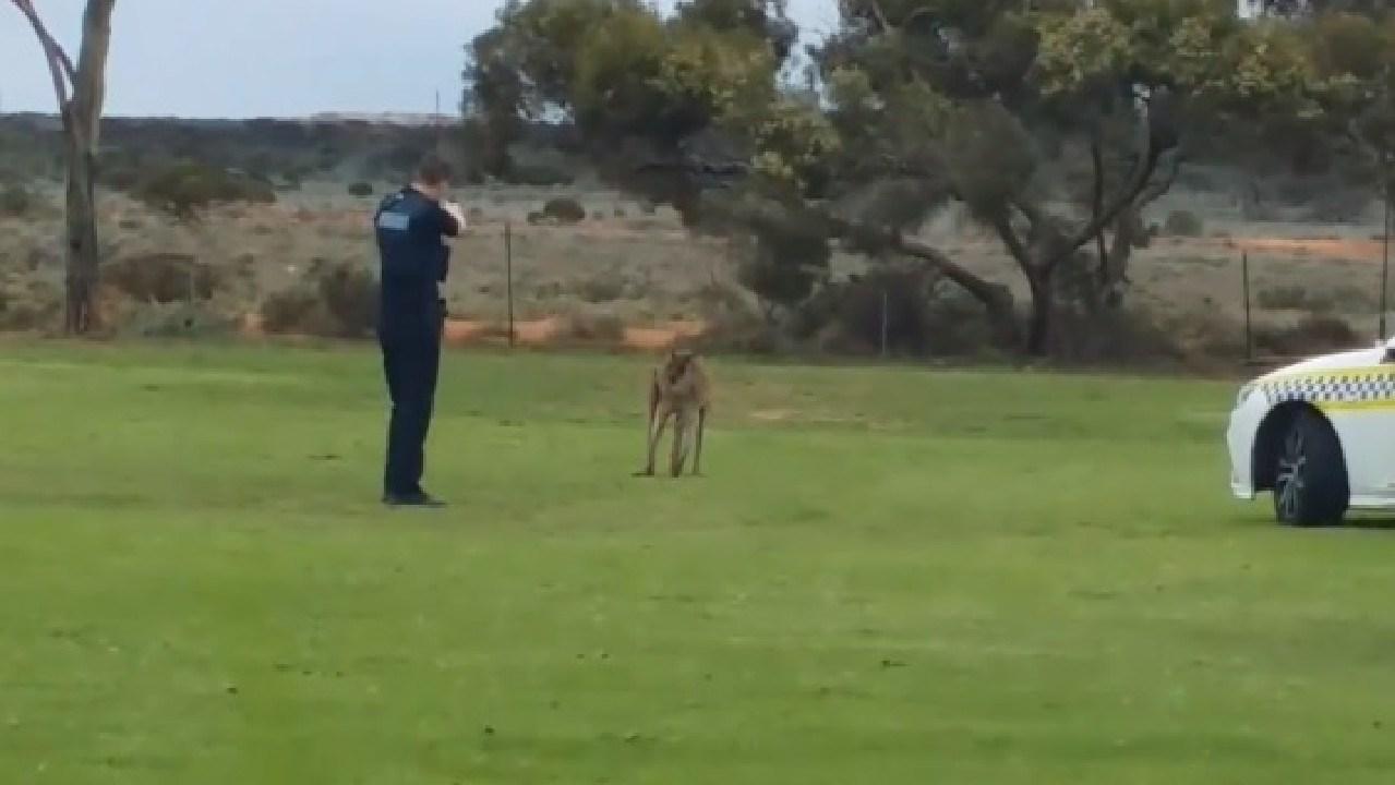 A South Australian officer is slammed for injured kangaroo shooting