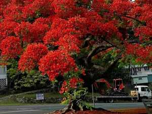 Uprooted trees a flaming outrage say locals