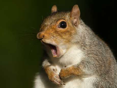 Many questions remain unanswered: Did you ever meet a squirrel? And who ordered said squirrel?