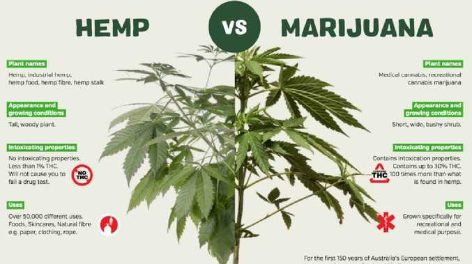 Hemp has more than 50,000 uses. Picture: Supplied