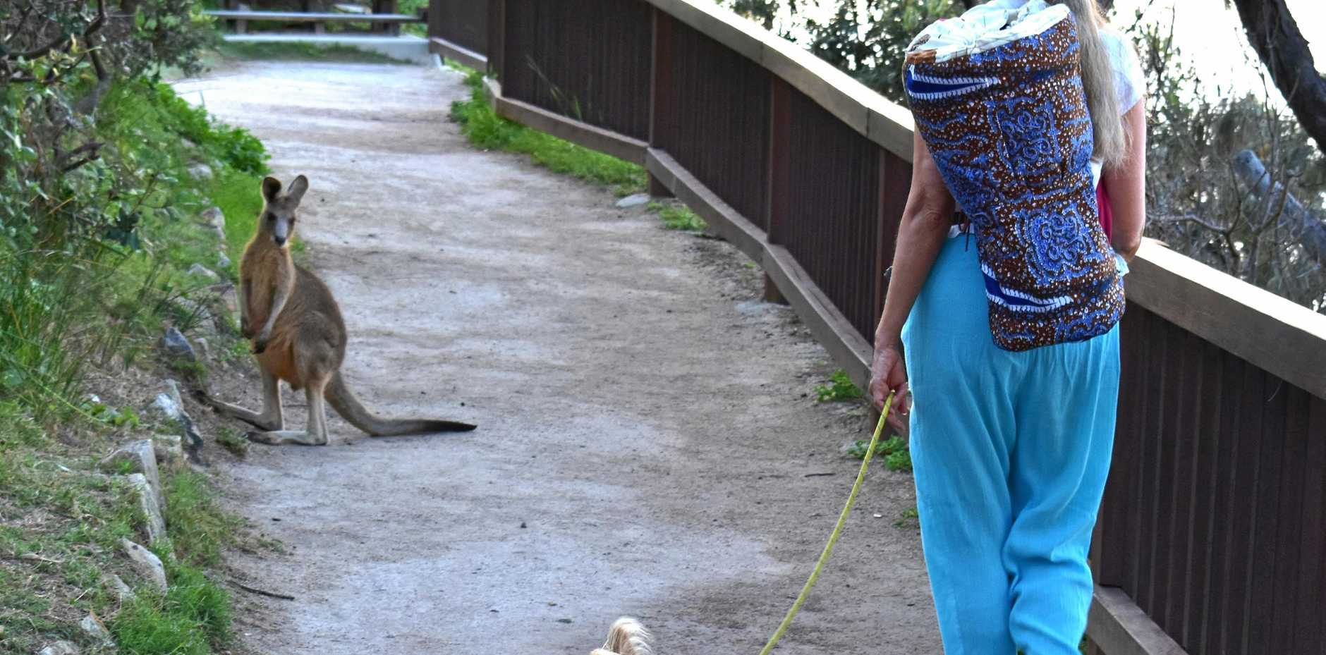 Cynthia Hoogstraten takes a stroll with her pooch and meets a wild friend.