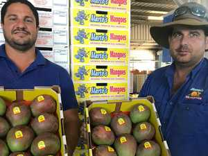 Bowen mango growers bounce back after Cyclone Debbie