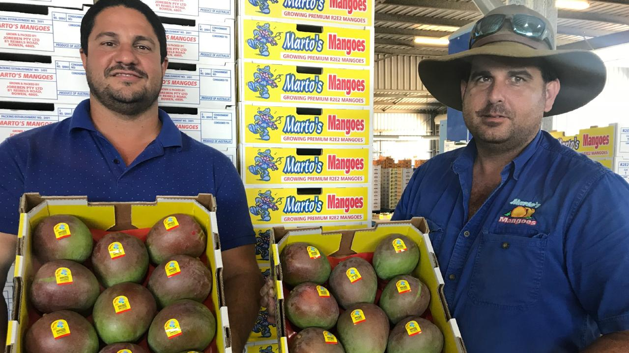 Brisbane agent Paul Joseph and Bowen mango grower Ben Martin with fruit destined for the New Zealand market Photo: John Andersen