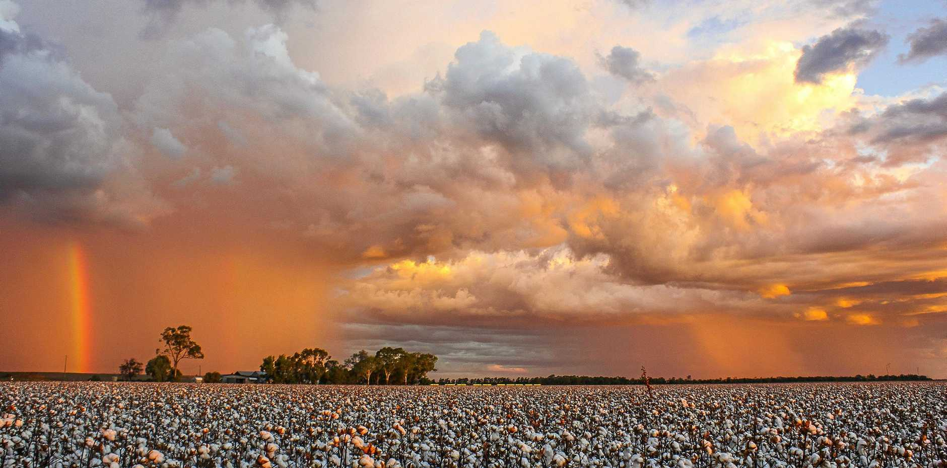 CLIMATE GUIDES: Condamine will be the among the first regions to nab the weather and climate outlook guides in development. Photo Peter Carruthers / Balonne Beacon