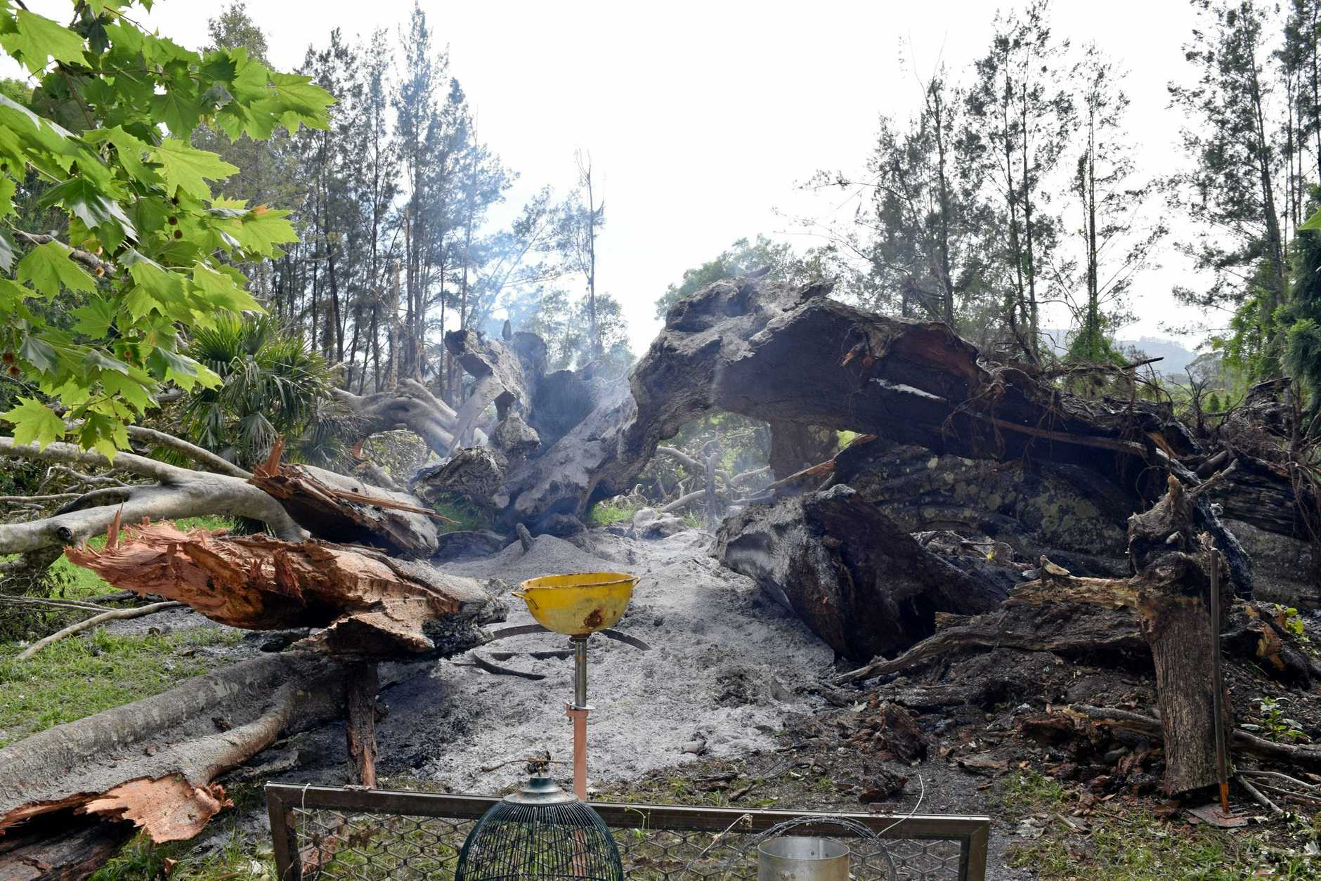 DEVASTATED:  Nimbin couple Greg and Carolyn Soward are upset someone came onto their property on Saturday and set fire to a fallen fig tree. The