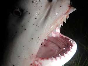 Shark 'corkscrewed 360 degrees on my leg like a chainsaw'
