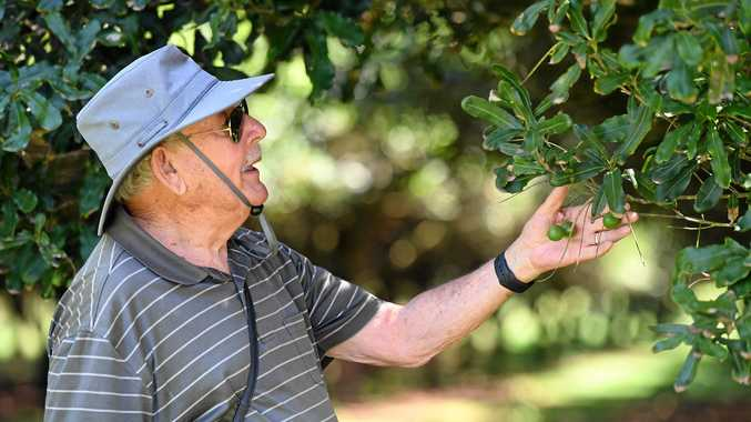 Letaba Macadamia Estate owner Henry Bader is very positive about the industry as the 2018 AUstralia Macadamia crop finishes 3% higher than previous forecast.