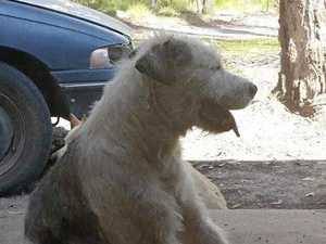 DEVASTATED: Family lose home and pet dog in bushfire