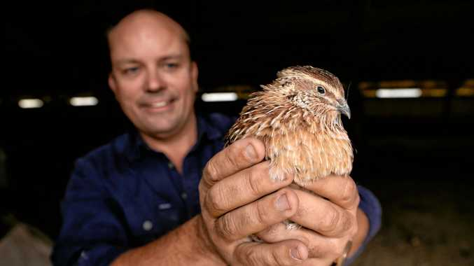 Brisbane Valley Protein co-director Duncan Brown with a quail.