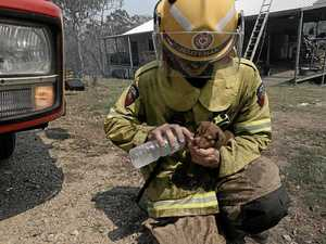 Puppy's firey hero named online