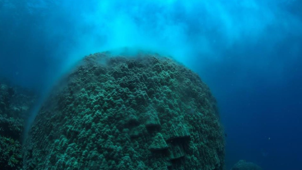Large brain coral recorded spawning at Norman Reef, about midday on Monday during heat wave by Down Under Cruise and Dive. Photo: Down Under Cruise and Dive/GBRMPA