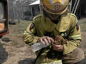 The reason puppy was left behind in fire zone