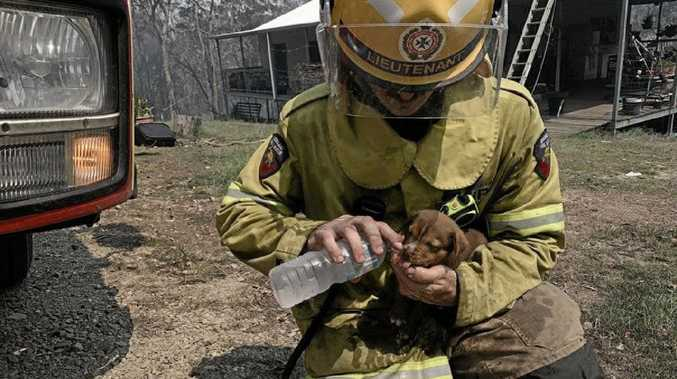 Image result for queensland bushfire  fireman giving puppy drink of water
