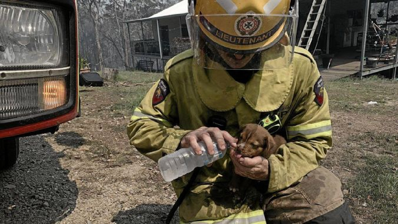 A firefighter gives the puppy a much-needed sip of water. Picture: QFES