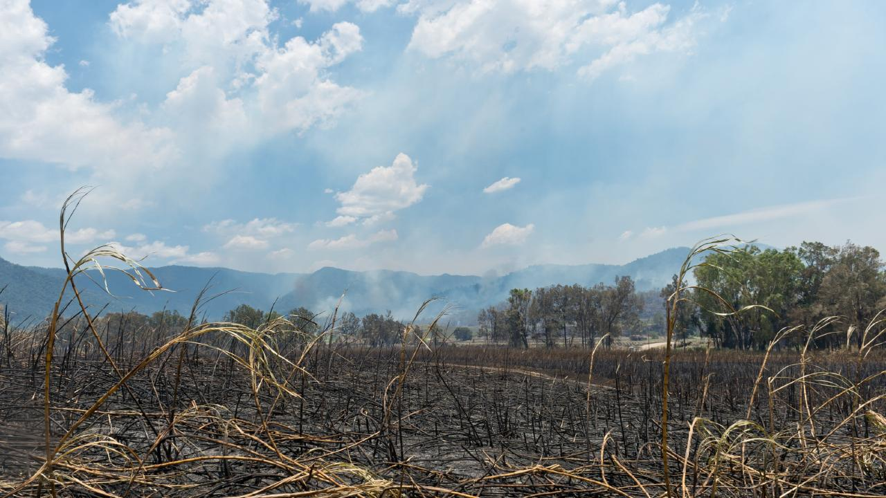 Fire damage between Finch Hatton and Netherdale. Picture: Supplied