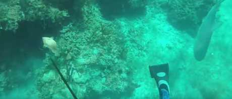 All is calm before a reef shark quickly swims beneath the man, on the way to Mr Krause. Picture: YouTube