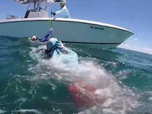 Horror footage of shark attack captured