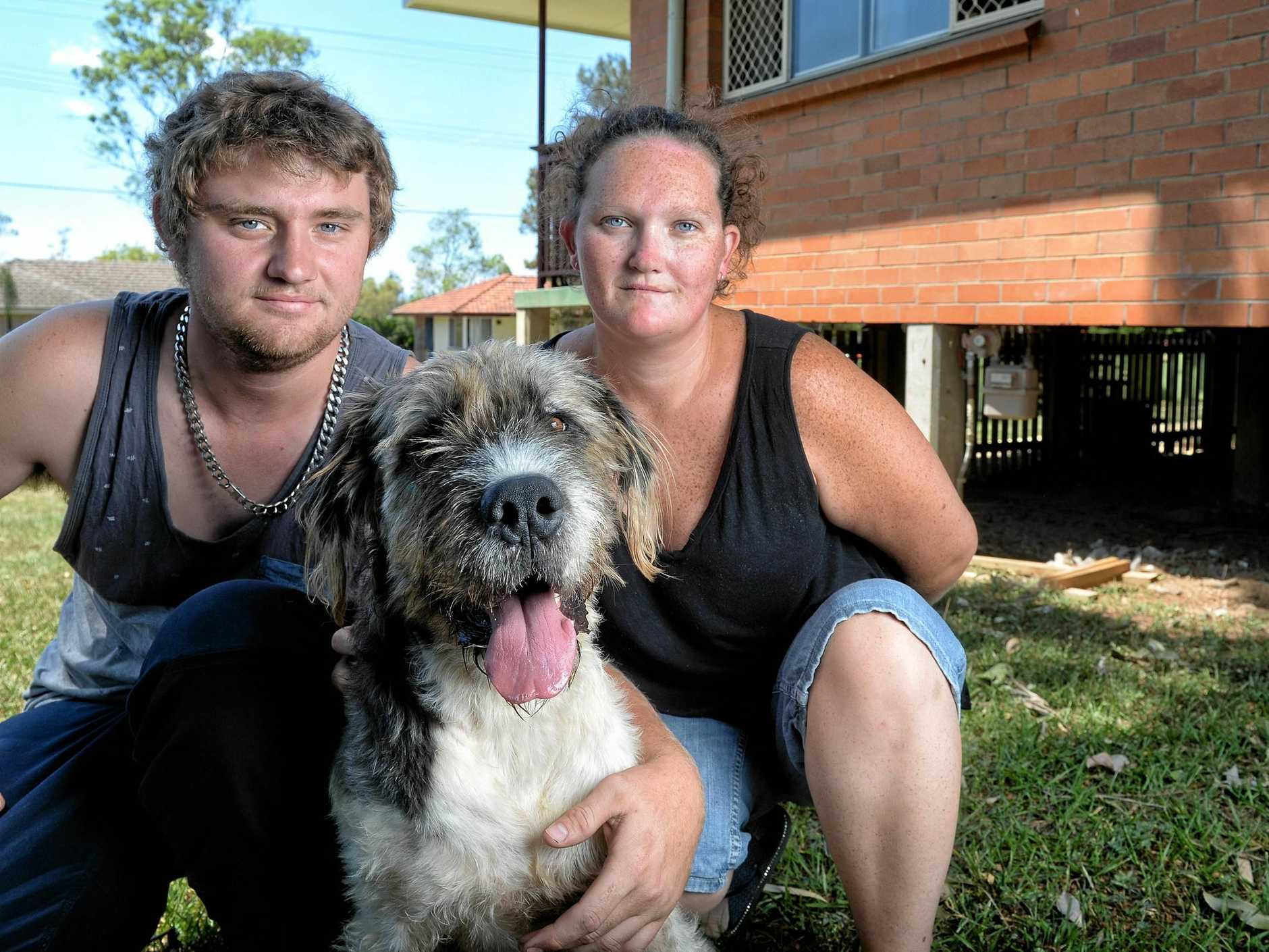 Jordan Melchior and Danielle Tupper with dog Snoopy who was was baited at the Leichardt property along with their other dog, Rusty, who died.