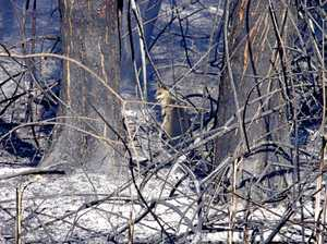 Fears for wildlife caught in fires