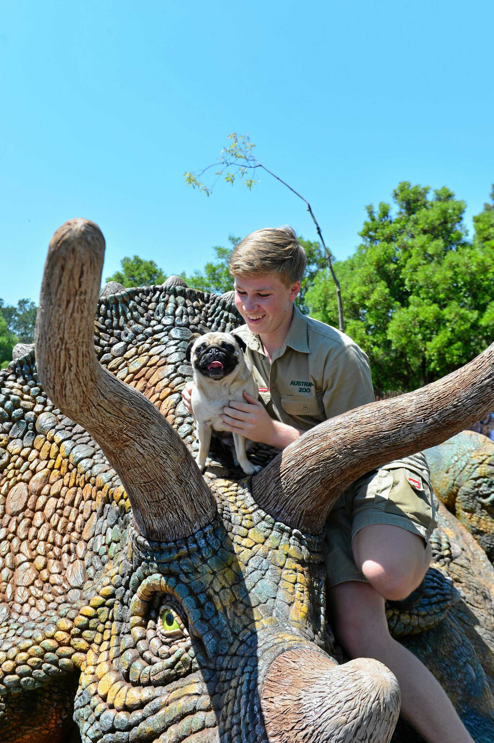 Robert Irwin celebrates his 15th birthday at Australia Zoo with a triceratops.