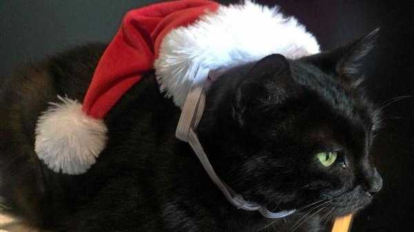 Mrs Santa is one of the cats with