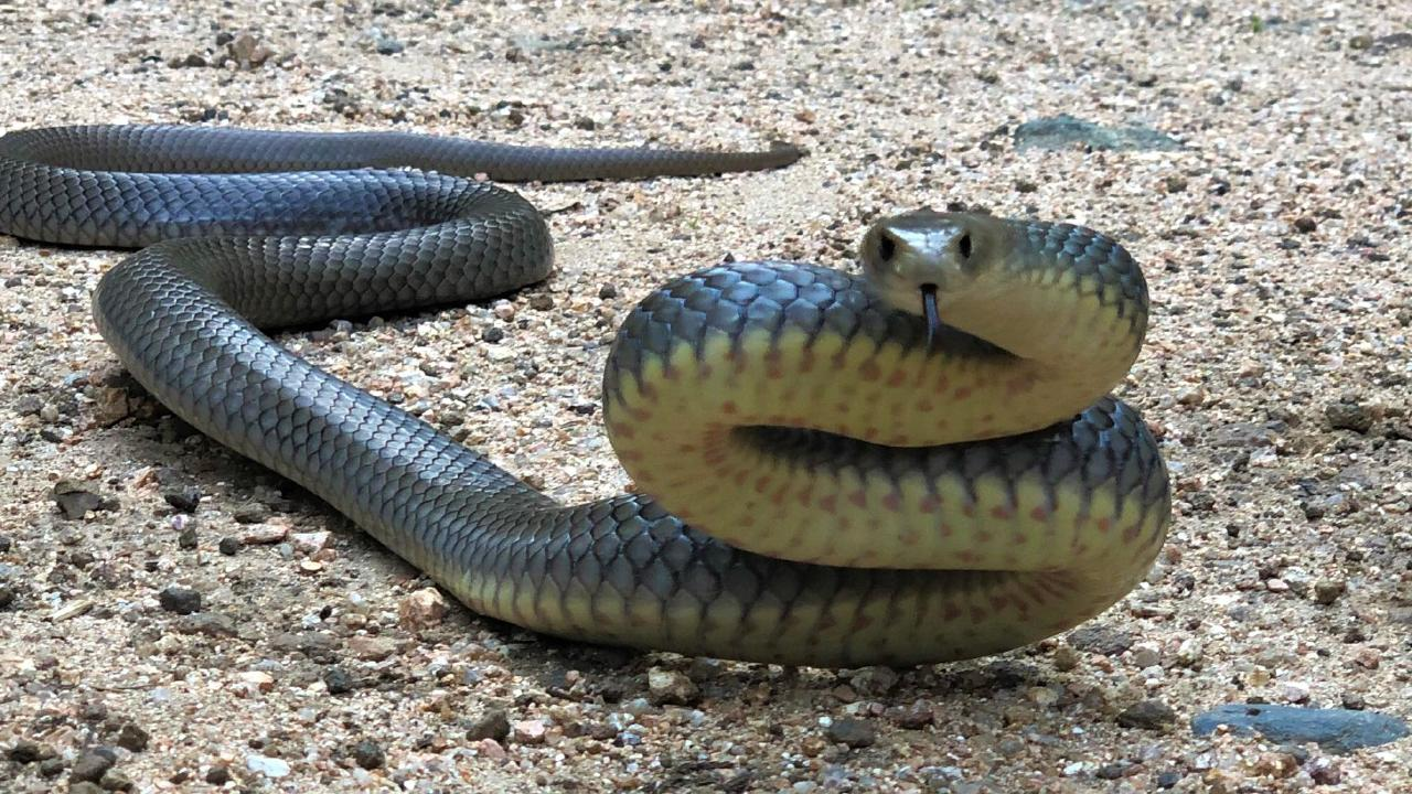 There have been reports of more snake bites because of the extreme heat.