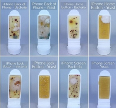 The phones' screens had the highest levels of bacteria, with 100 colony forming units (CFU) per cm2 for the Samsung Galaxy, 40 CFU for the iPhone, and 12 CFU for the Google Pixel.