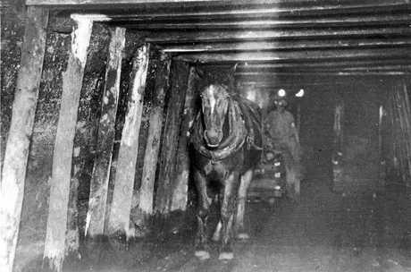 3. Pit pony hauling a coal wagon at QC Gauchalland Mine, 1920.