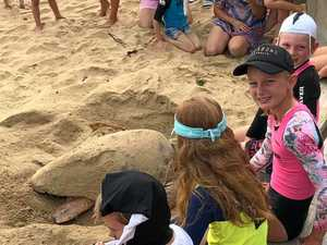 Sea turtle goes to beach cafe for morning eggs