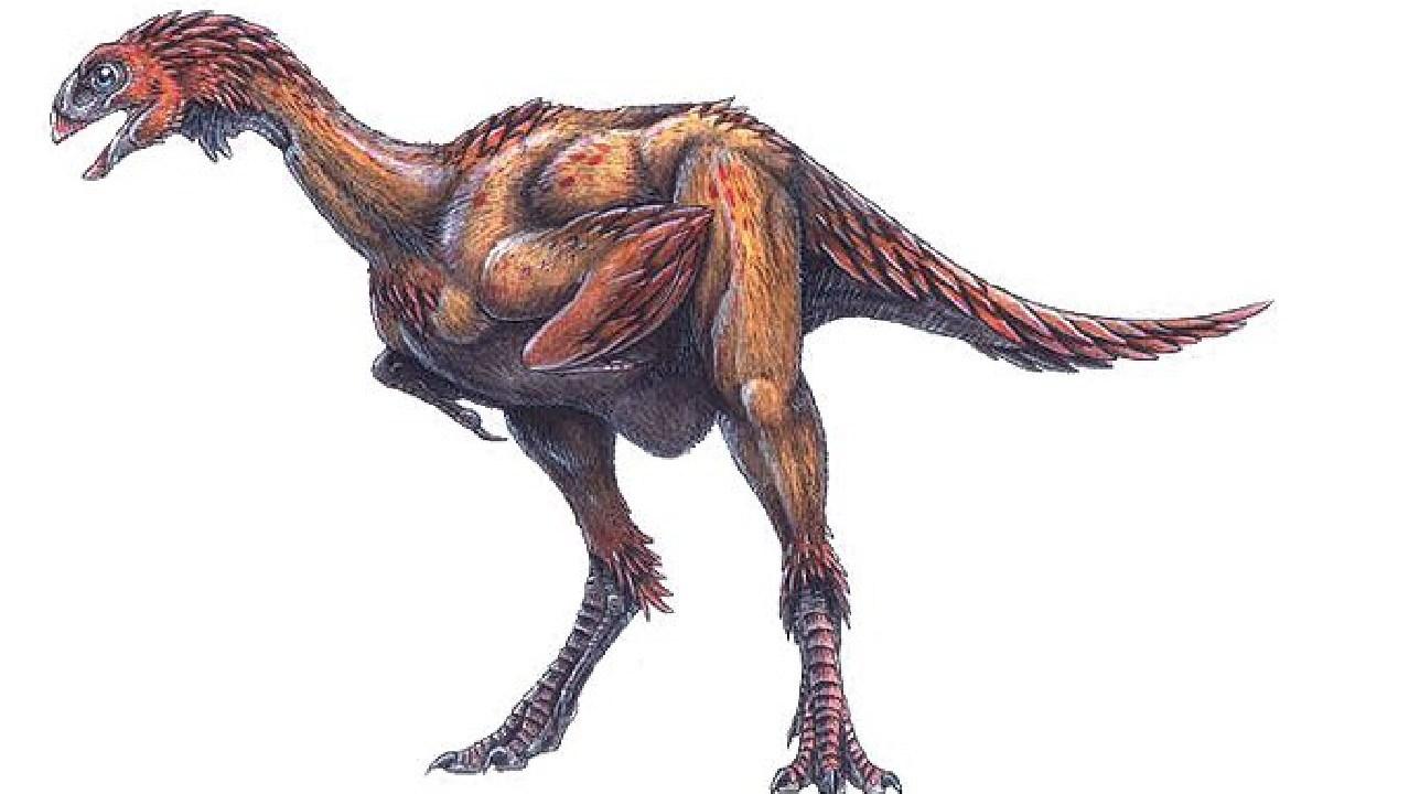 Sketch of the only known South Australian dinosaur Kakuru kujani.