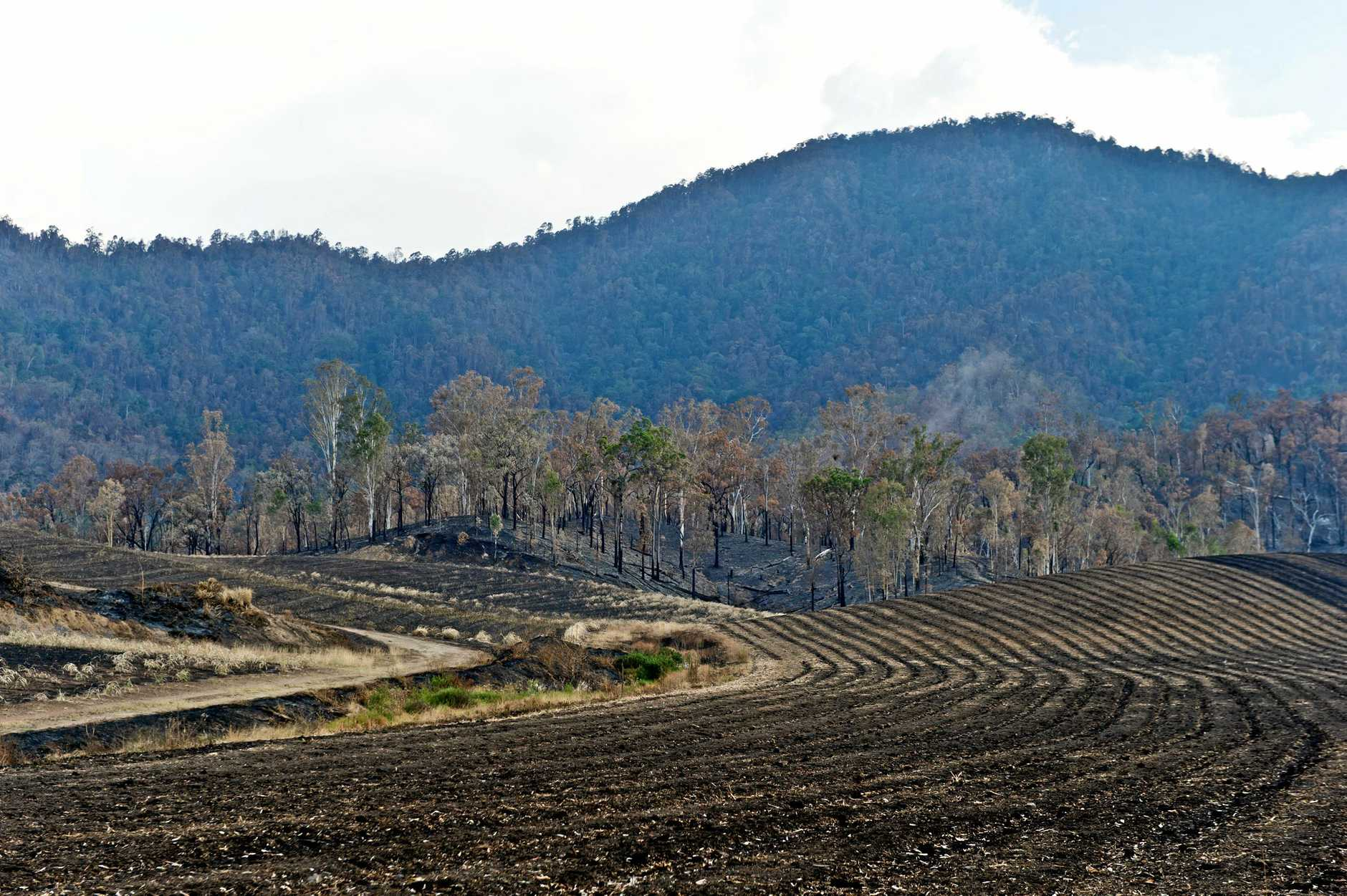 Fire damage to a cane farm in Finch Hatton.