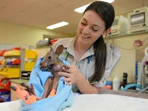 MAJOR MILESTONE: Wildlife hospital treats 80,000th patient
