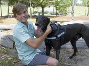 Retired greyhounds help children with disabilies