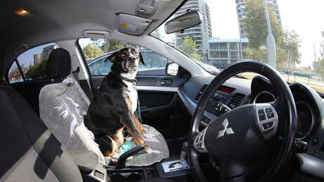 The RSPCA is responding to dogs locked in hot car call-outs every second day. Picture Jason O'Brien