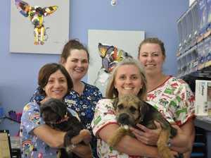 Touch of Toowoomba: Toowoomba Veterinary Hospital