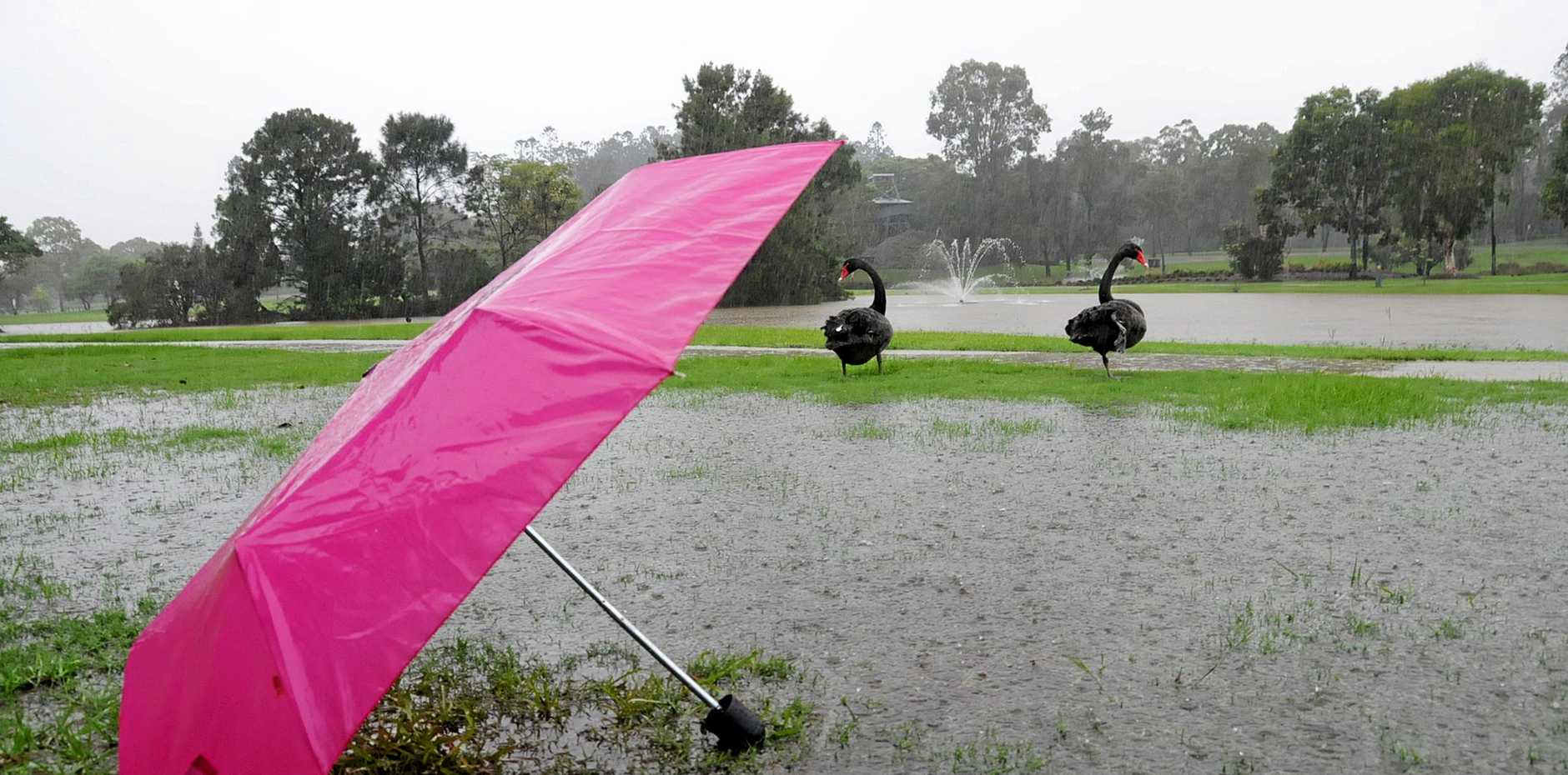 WET: More showers are on the cards in the Gympie region today.