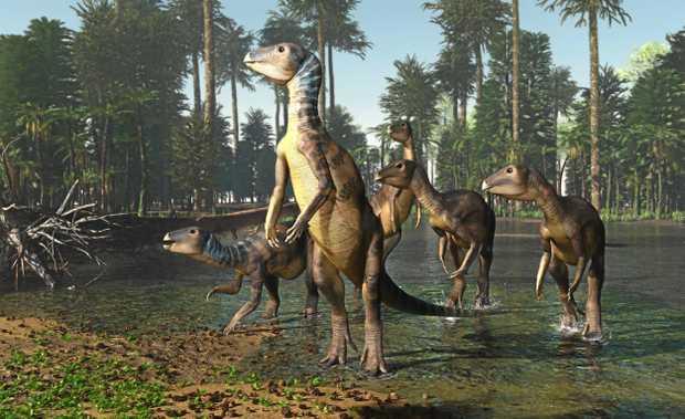 Artist's reconstruction of Weewarrasaurus pobeni.
