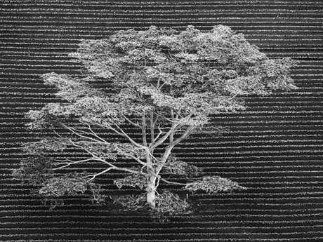 The man-made straight lines of the ploughed furrows are interrupted beautifully by nature's more unruly wild pattern of tree branches. Picture: Anna Henly/Wildlife Photographer of the Year/Natural History Museum