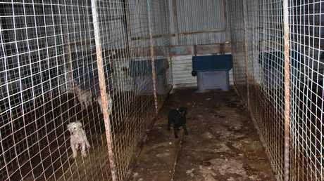 Dogs bred by puppy farmers can live in horrific conditions.