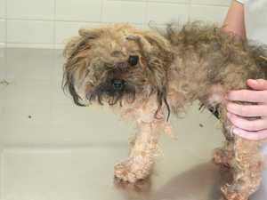 Cruel puppy farms hiding in plain sight
