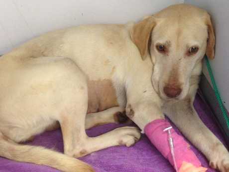 Puppy farm mum Tillie was found in a terrible state with extensive injuries and illness.