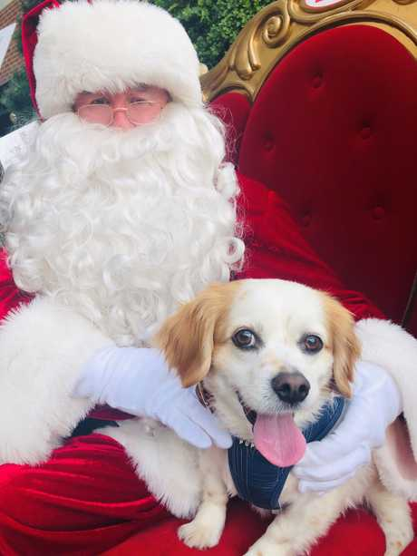 Rolly, a good boy, meeting Santa at a recent Grand Central pet photography session.