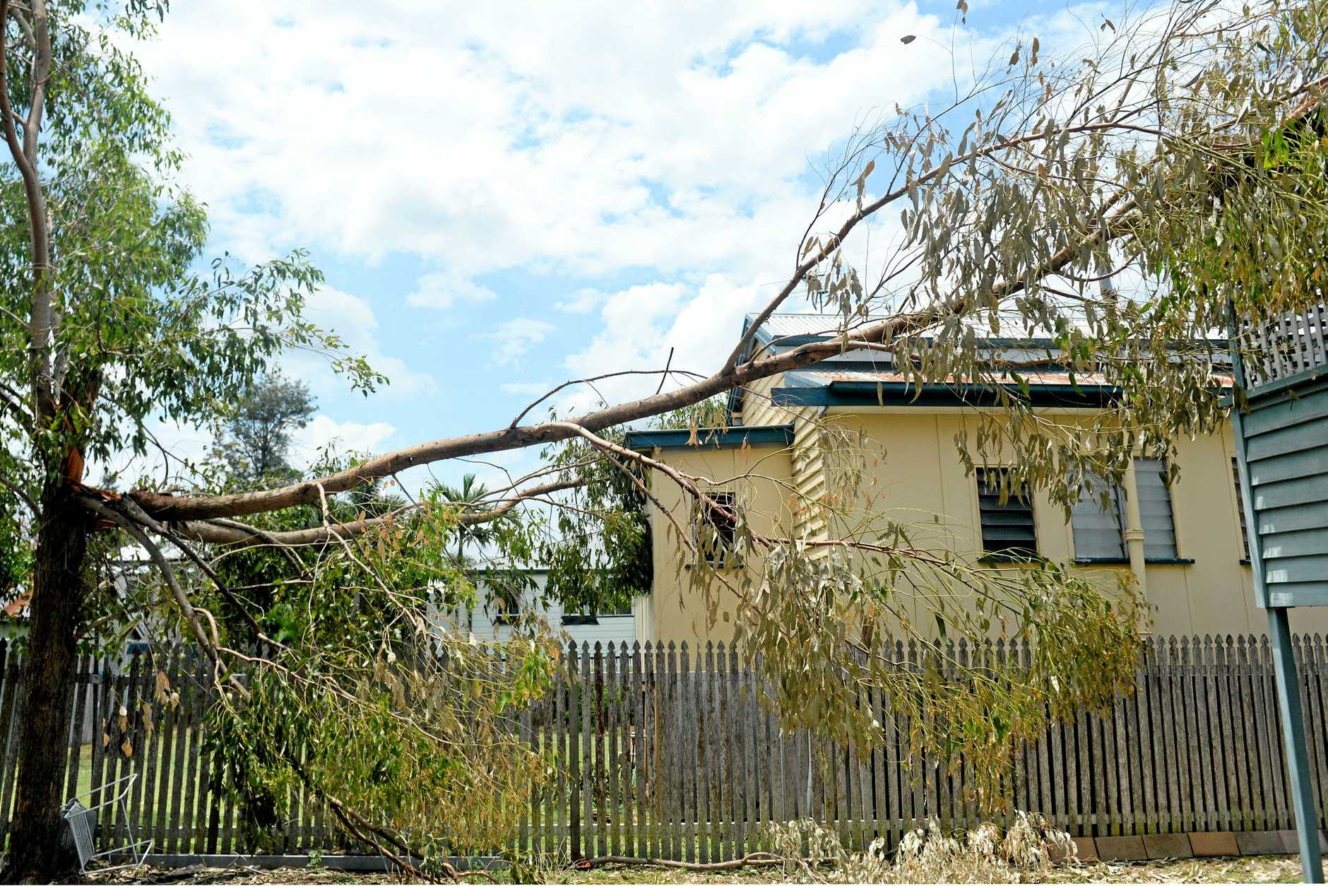 December's violent storm brought this tree down onto both neighbours' roofs