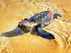 Turtle tourism helps drive region's economy