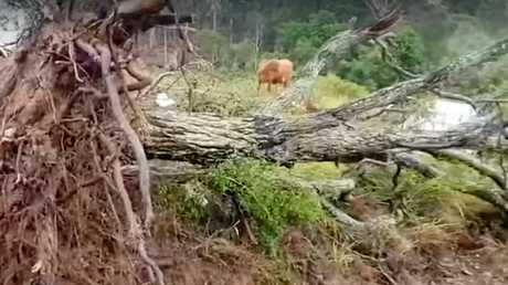 Storm leaves path of destruction at Bungadoo property.