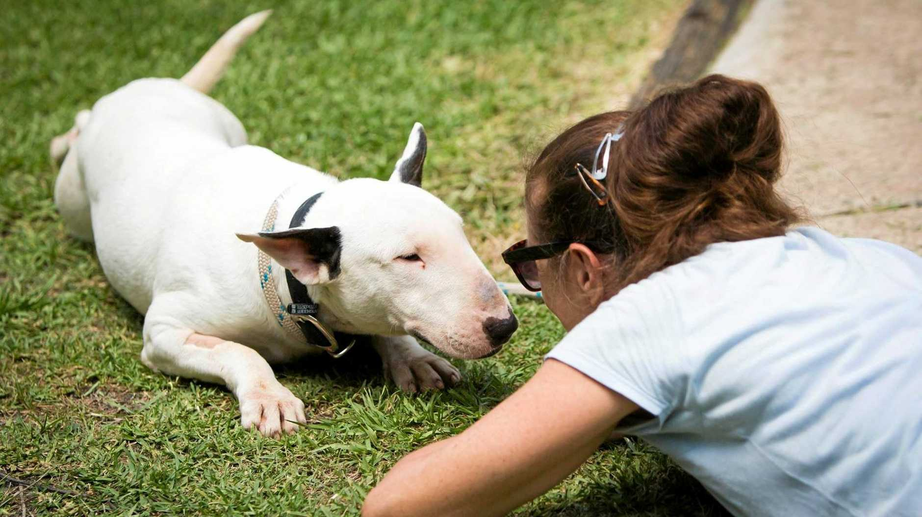 PLAYFUL: RSPCA Noosa volunteer Kitty O'Brien with bull terrier Billy.