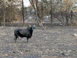 Graziers pick up the pieces after bushfire devastation