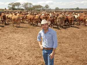 Beef Australia announces new chairman to replace Blair Angus