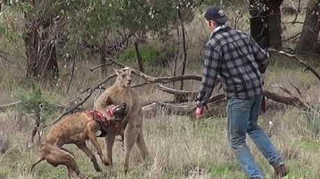 Greig Tonkins saved his dog from the kangaroo.