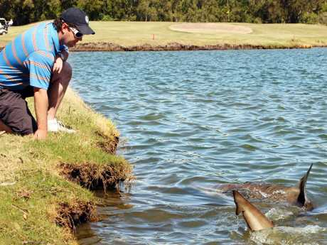 Carbrook Golf Club general manager Scott Wagstaff pictured in 2011 with one of the sharks that lives in water at the golf course. Picture: Jodie Richter